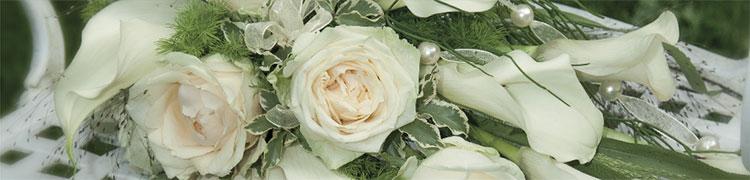 Inga Paulsen - Fotografie Hochzeit | Konfirmation | Taufe | Geburtstage | Jubiläum